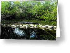 Native Floridian Greeting Card