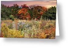 Native Garden Sunset Greeting Card