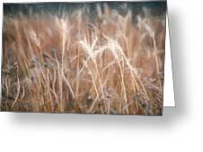 Native Grass Greeting Card