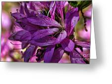 Native Long Petals Greeting Card