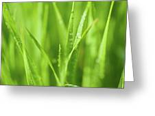 Native Prairie Grasses Greeting Card