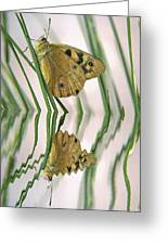 Native Tasmanian Butterfliy. Greeting Card