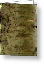 Native Tree Greeting Card