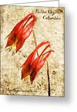 Native Virginia Columbine Greeting Card