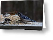 Natures Birds 51 Greeting Card