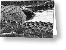 Gator 2 18 Greeting Card