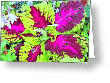 Natural Abstraction Greeting Card
