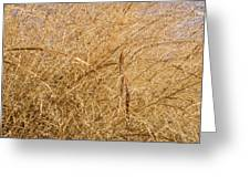 Natural Abstracts - Elaborate Shapes And Patterns In The Golden Grass Greeting Card