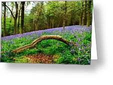 Natural Arch And Bluebells Greeting Card