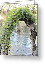 Natural Archway Over Hillsborough River Greeting Card
