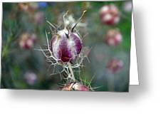 Natural Background With Purple Spiky Bulbs. Greeting Card