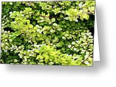 Natural Background With Small Yellow Green Leaves. Greeting Card