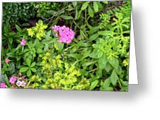 Natural Background With Vegetation And Purple Flowers. Greeting Card