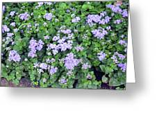 Natural Bush With Purple Small Flowers. Greeting Card