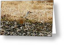 Natural Camouflage Greeting Card