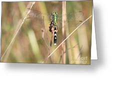 Natural Canvas With Dragonfly Greeting Card