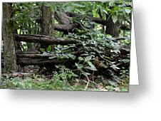 Natural Wood Fence Greeting Card