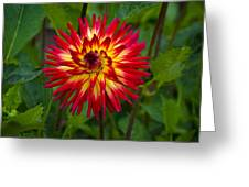 Natural Fireworks Greeting Card