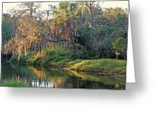 Natural Florida Landscape Greeting Card