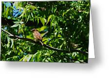 Natural Insect Repellant Greeting Card