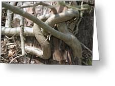 Natural Knot Greeting Card by Dagmar Batyahav