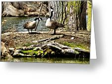 Natural Landscape Greeting Card
