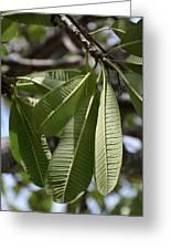Natural Leaf Greeting Card