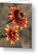 Natural Posing Beauty Greeting Card