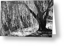 Natural Screen Greeting Card by Gerlinde Keating - Galleria GK Keating Associates Inc