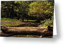 Natural Seating By River Greeting Card