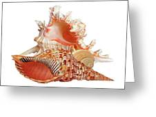 Natural Shell Collection On White Greeting Card