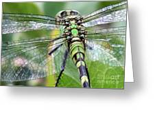 Natural Stained Glass Greeting Card
