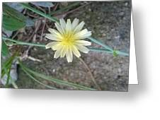 Natural... White And Yellow Flower Greeting Card