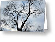 Nature - Tree In Toronto Greeting Card