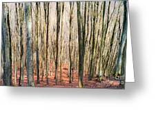 Nature 11 Greeting Card