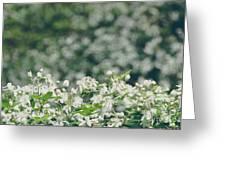 Nature 2 Greeting Card