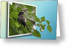 Nature Bird Greeting Card