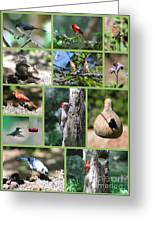 Nature Collage Greeting Card