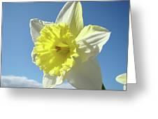 Nature Daffodil Flowers Art Prints Spring Nature Art Greeting Card