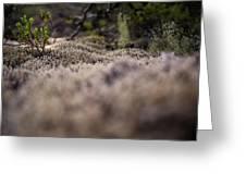 Nature Detail Greeting Card