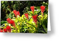 Nature Exotic Greeting Card