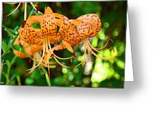 Nature Floral Orange Tiger Lily Flowers Baslee Troutman Greeting Card