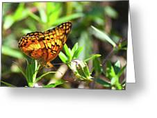 Nature From South Carolina Greeting Card