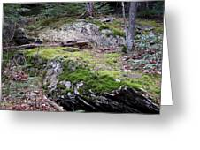 Nature Has An Intimate Process In Raw Unwalked Places Greeting Card