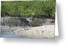 Nature In Florida Greeting Card