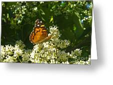 Nature In The Wild - A Light In The Darkness Greeting Card