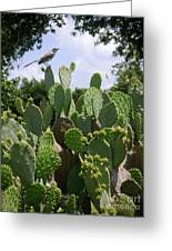 Nature In The Wild - A Prickly Perch Greeting Card