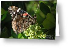 Nature In The Wild - A Rest For The Weary Greeting Card