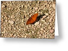 Nature In The Wild - A Splash Of Color On The Rocks Greeting Card