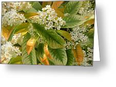 Nature In The Wild - A Summer's Day Greeting Card
